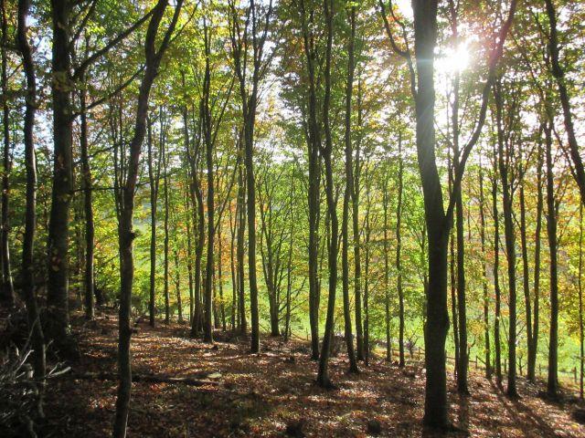 640_480px_autumn_woodland